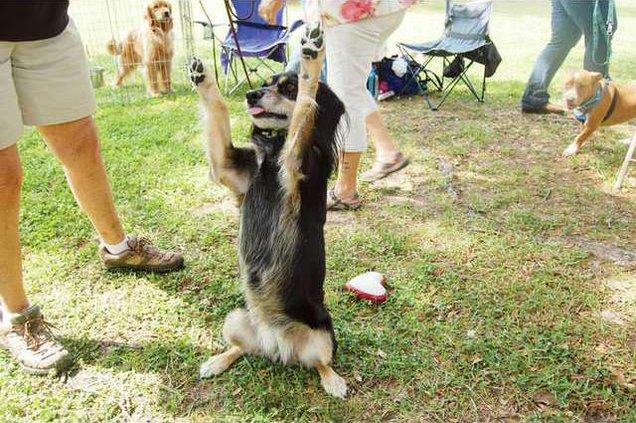 Dogshow1 2 WEB