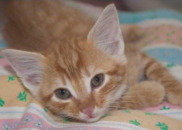 Pet of the week - cat