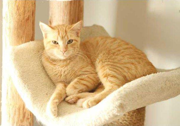 Pets - Cat - 06-08-12