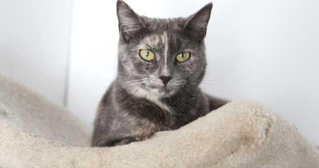 Pet of week - cat