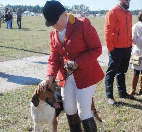 Colonial Cup Fox Hound puppy WEB