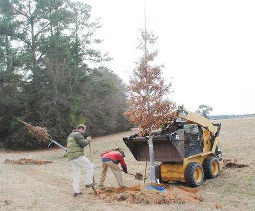 Tree Foundation Plantings 2