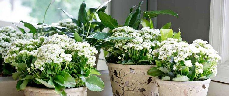 House Plants (Web).jpg