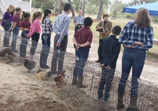 Poultry Show (W)
